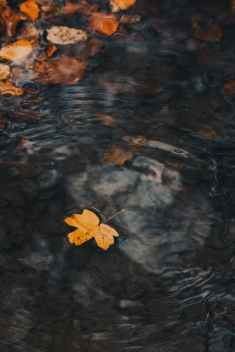 brown leaf floating on water